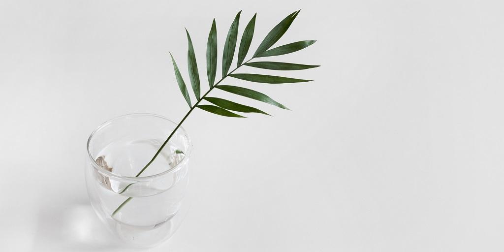 plant leaves, source: sarah-dorweiler-357959-unsplash